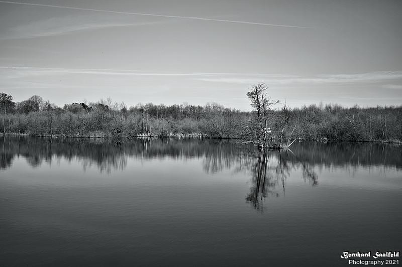 Forest Pond Wahner Heide Cologne - Bernhard Saalfeld