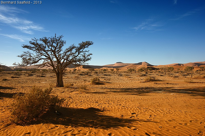In der Namib